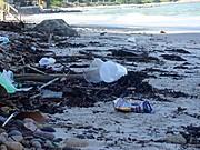 ¡Nayarit Y Puerto Vallarta Se Comprometen Con Las Playas Limpias!