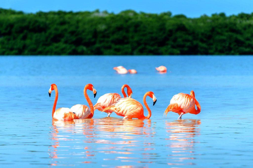 Celestún Quintana Roo