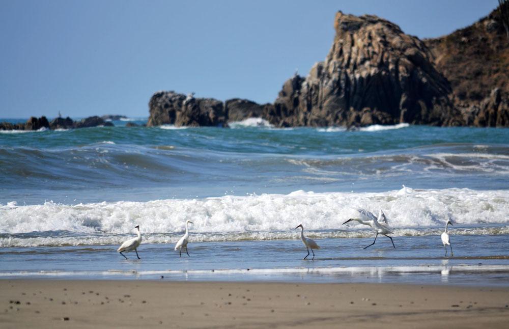 Bahías De Maguey Y El Órgano