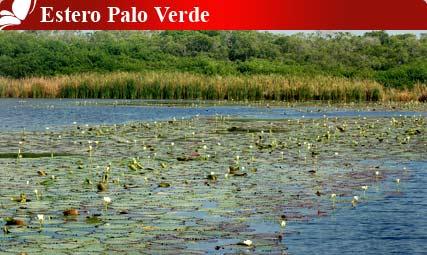 Estero Palo Verde, Colima