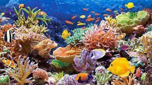 Gran Arrecife Maya