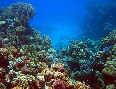 Arrecifes, Dónde Y Cómo Disfrutarlos En México