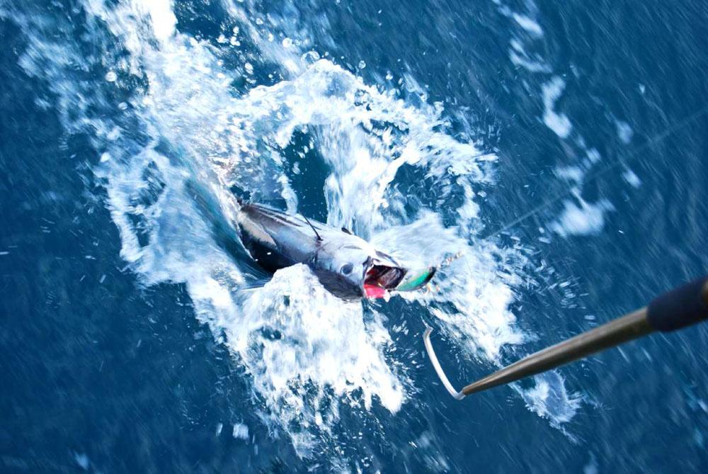 A Disfrutar De La Pesca En Acapulco