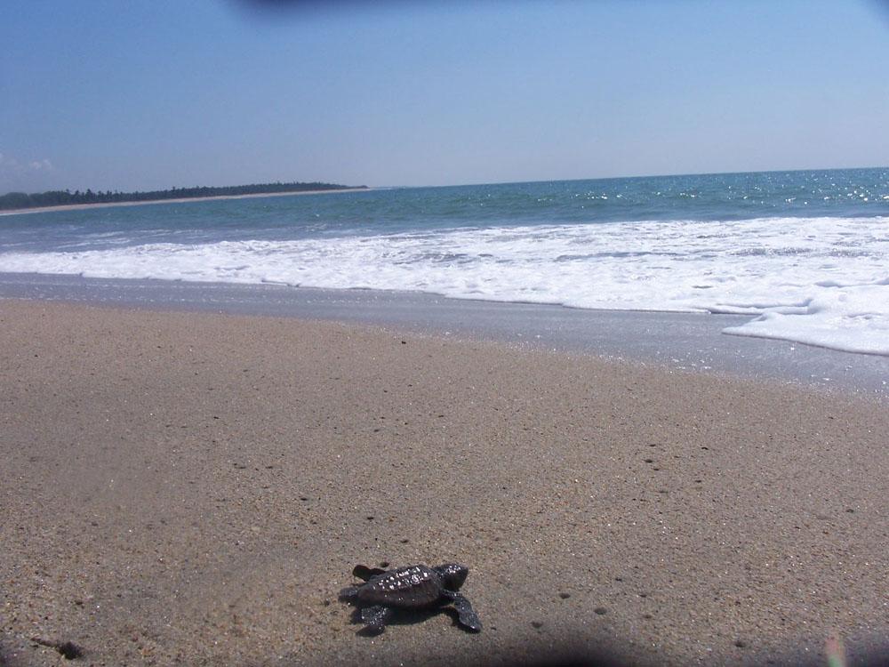 Marquelia Y Sus Hermosas Playas