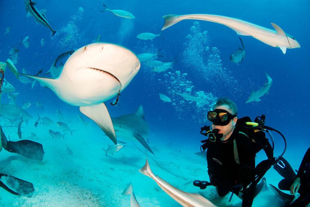 Buceo Con Tiburones En Las Playas De México