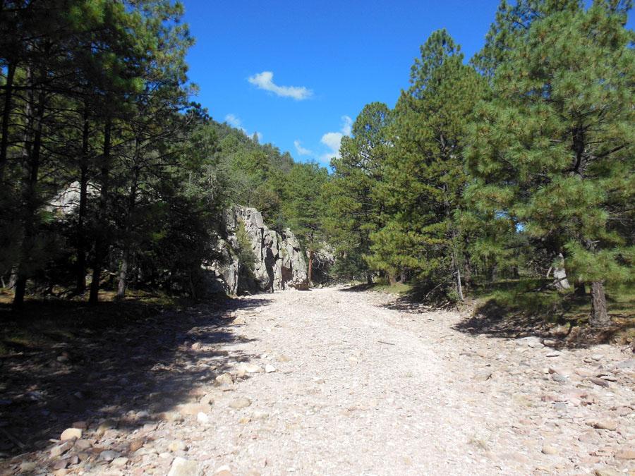 Reserva De La Biosfera De Los Janos, Chihuahua