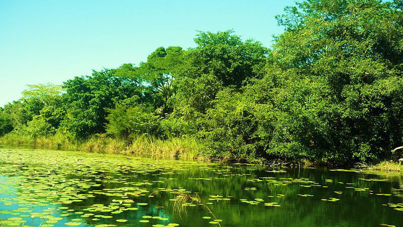 Reserva De La Biosfera De Los Petenes, Campeche