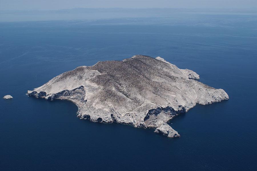 Reserva De La Biósfera Isla San Pedro Mártir, Baja California