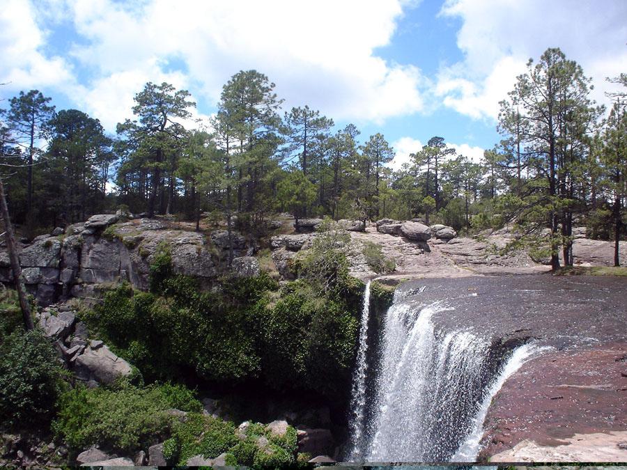 Reserva De La Biosfera La Michilía, Durango