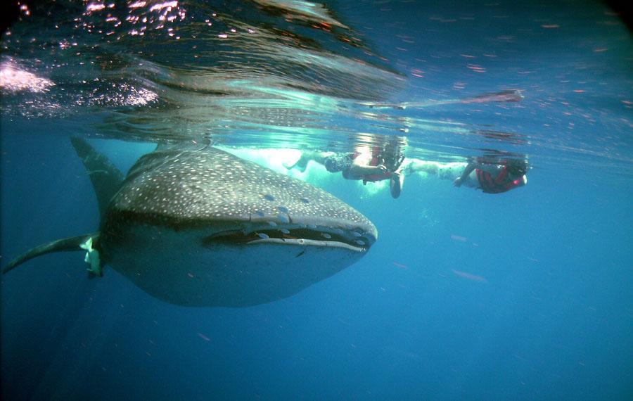 Reserva De La Biosfera Tiburón Ballena, Quintana Roo