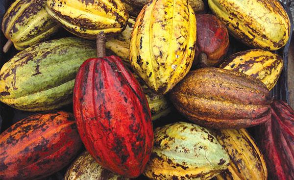 Ruta Del Cacao, Chiapas