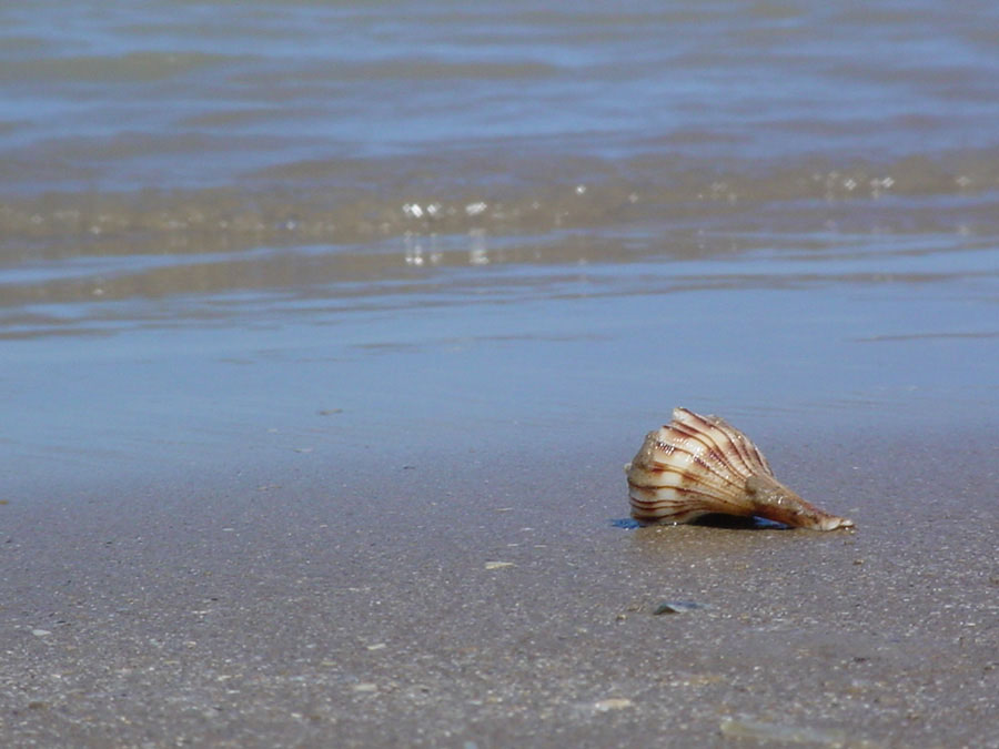 Fotos De Costa Azul - Playa Bagdad, Tamaulipas