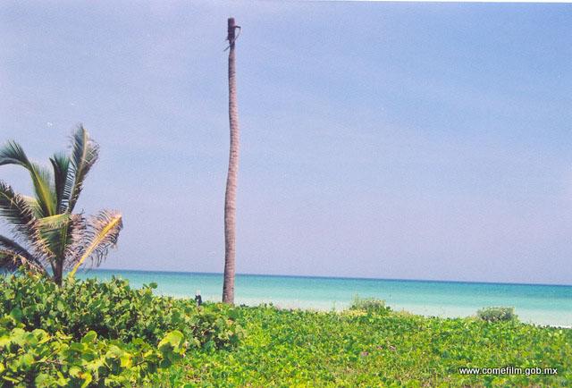 Galeria De Fotos De El Palmar Yucatán