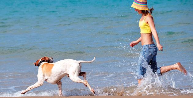 Acapulco, Guerrero Playa, Atardecer... ¡y Tu Mascota!