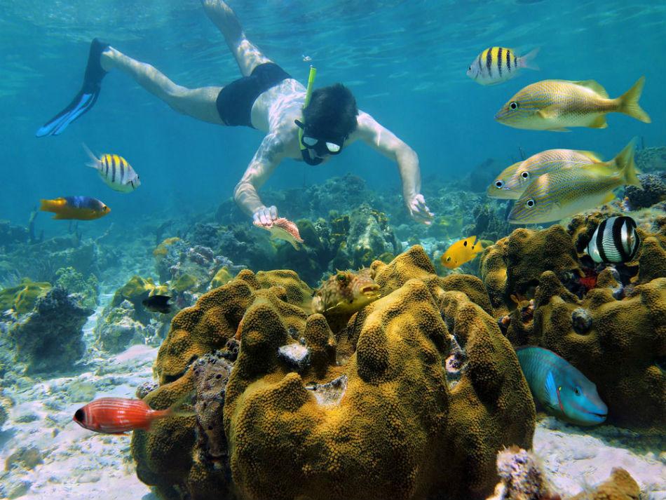 Los Arrecifes De Playa Del Carmen