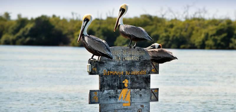Fotos De Río Lagartos Yucatan