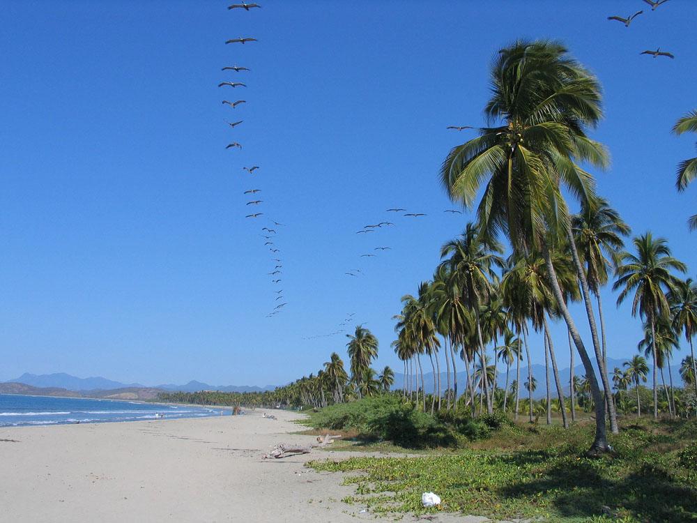 Fotos De Isla Ixtapa Guerrero
