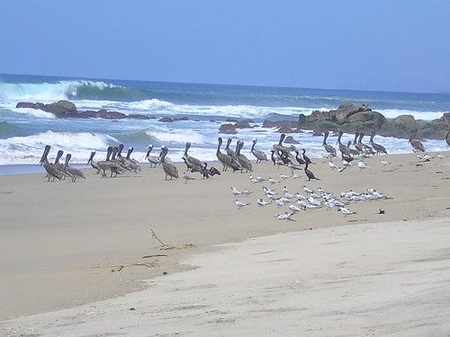 Fotos De Playa La Barrita Guerrero