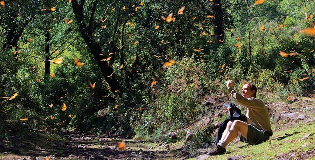 Santuario Ejido El Capulín, Mariposa Monarca
