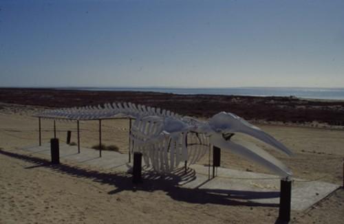 Fotos De Playa Guerrero Negro Baja California Sur