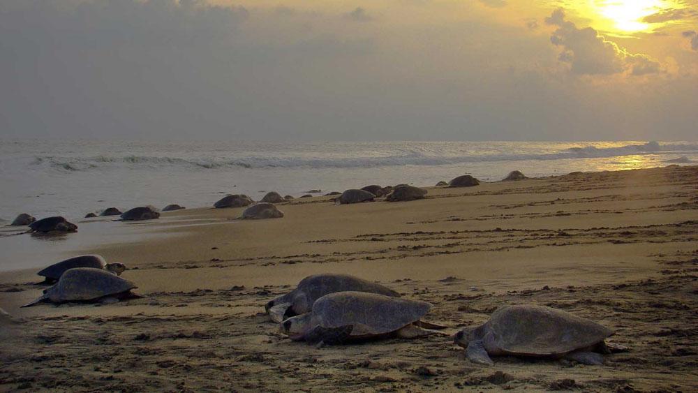 Fotos De Playa La Escobilla Oaxaca