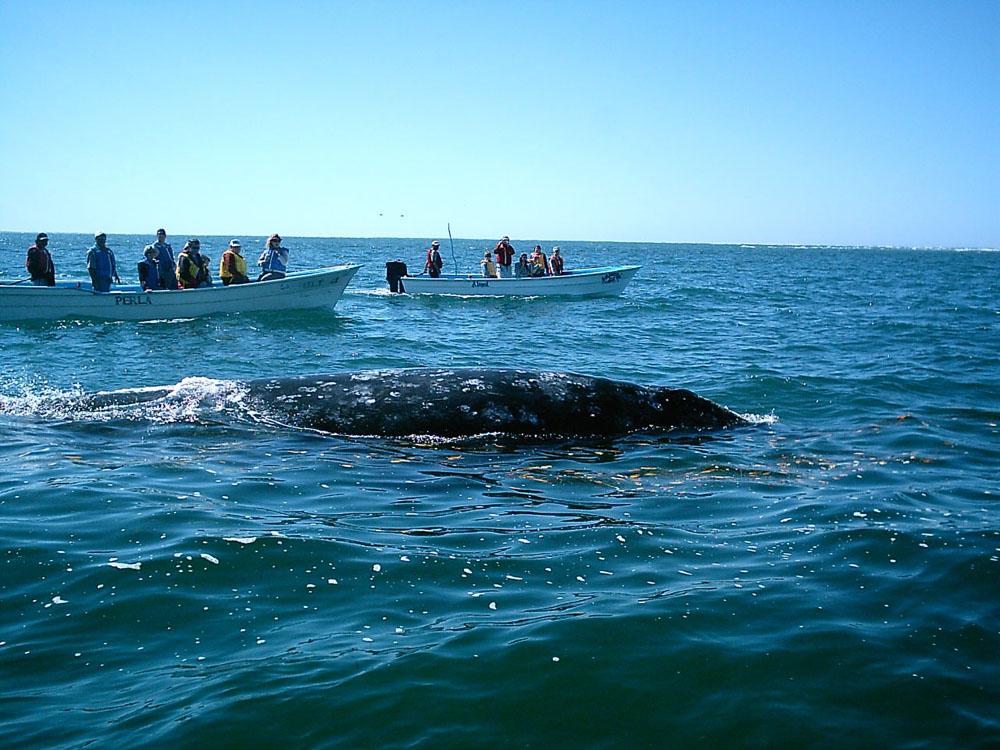 Fotos De Puerto Adolfo López Mateos Baja California Sur