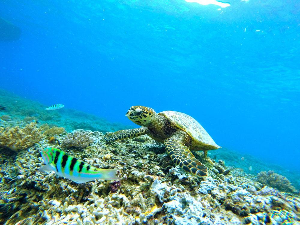Áreas Protegidas De Quintana Roo
