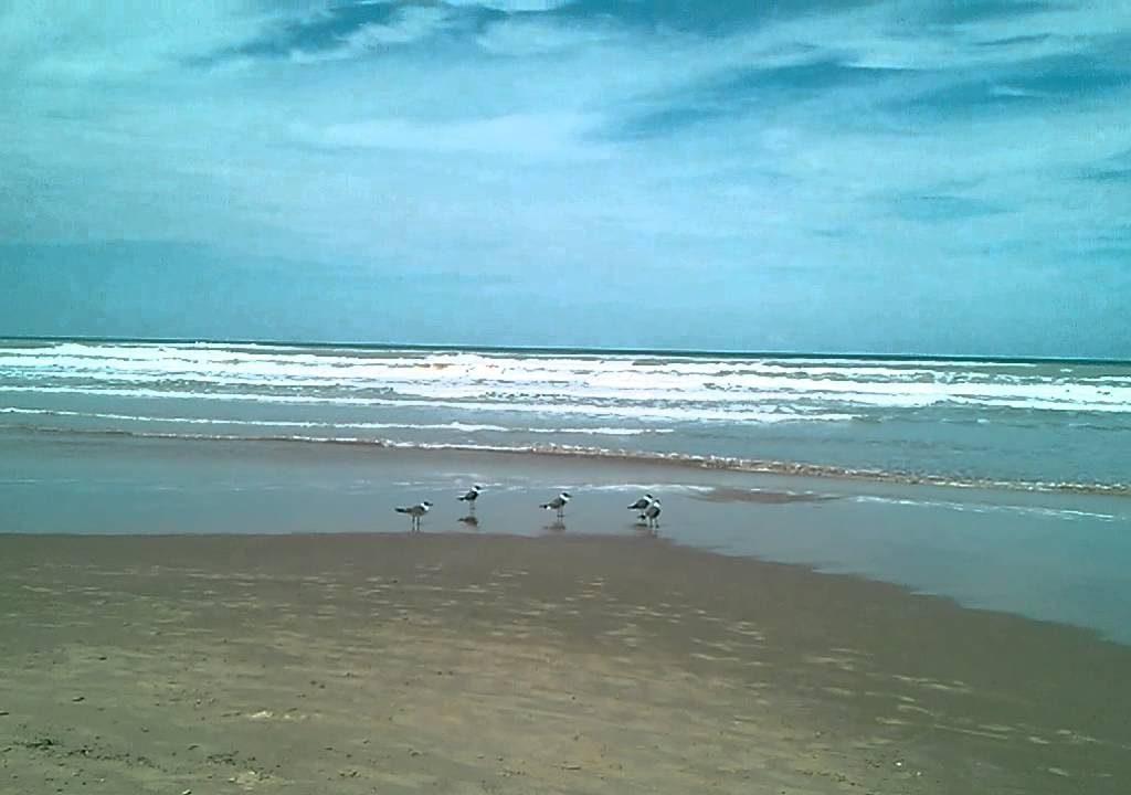 Fotos De Playa Miramar, Tamaulipas