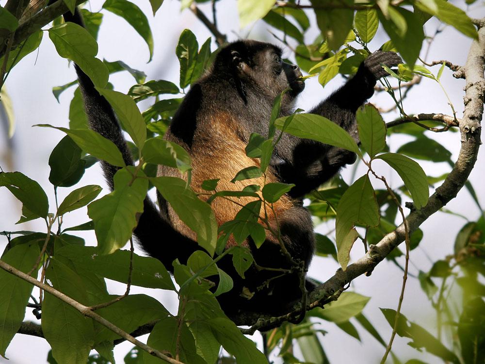 Turismo Ecológico Y Natural En Chiapas