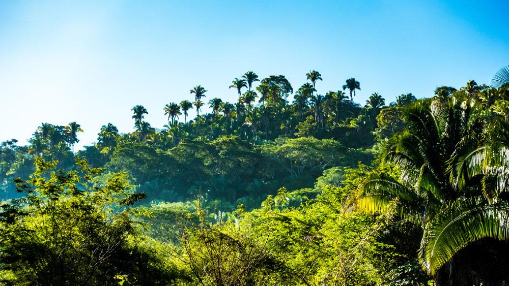 Disfruta De La Naturaleza Pura En Petatlán, Guerrero