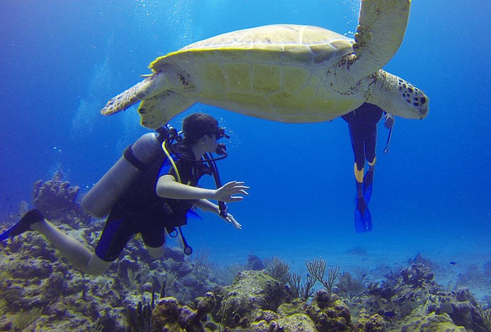 Mejores Playas Y Balnearios Para El Buceo En México
