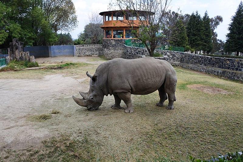 Visita El Zoológico De Zacango En El Estado De México