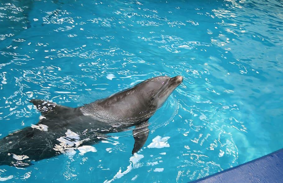 Beneficios De Nadar Con Delfines En México