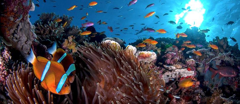 El Gran Arrecife Maya